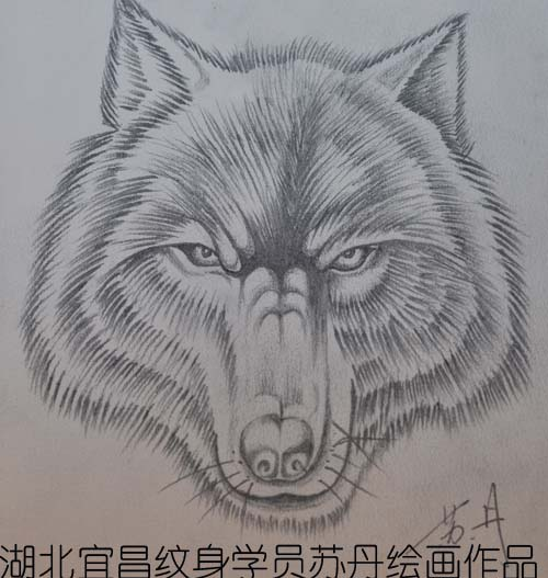狼的素描图片-湖南专业文身培训学员林泽安狼头素描作品图片